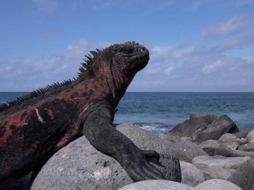 Galápagos, Ecuador